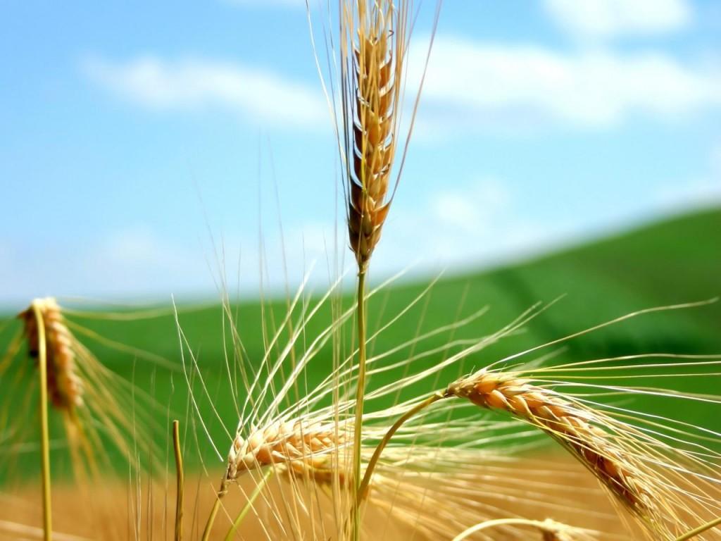 Los Cereales que fomentan la salud..
