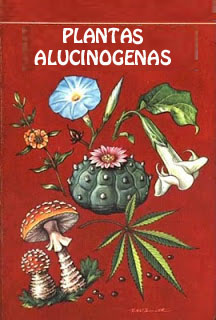 Las plantas alucinógenas y Pitón