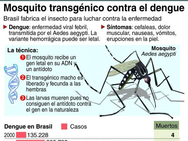 mosquitos-transgenicos-nuevo-producto-industrial-el-brasil