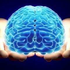 Sexualidad en los Jóvenes 1, El cerebro de los Jóvenes y la Búsqueda de Conductas de Riesgo