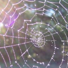 Madre Gaia, La tela de Araña.